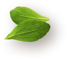 about-leaf-1